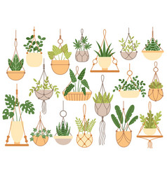 Plants in hanging pots decorative macrame vector