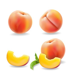 Ripe peach fruit with leaf isolated realistic vector