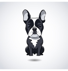 French bulldog isolated on white background vector