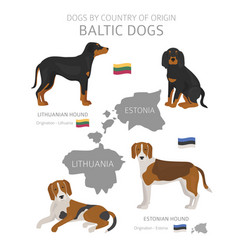 Dogs country origin baltic dog breeds vector
