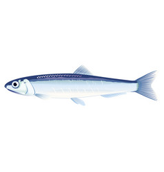 European anchovy fish vector