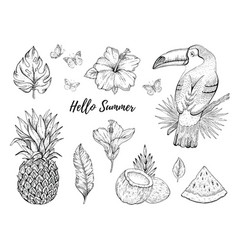 Hello summer tropic set fruit flower food vector