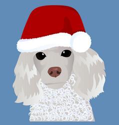 Poodle in santa cap close up vector