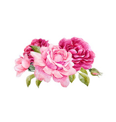 Watercolor roses composition vector