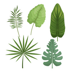 set leaves differents palm tropical vector image vector image