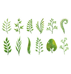 designer elements set collection of green vector image
