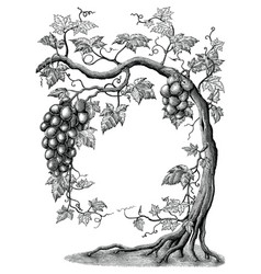 Grape tree hand drawing vintage engraving on vector