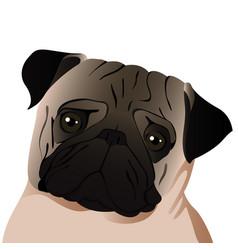 Pug close up vector