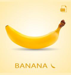 single fresh banana fruit isolated on a background vector image