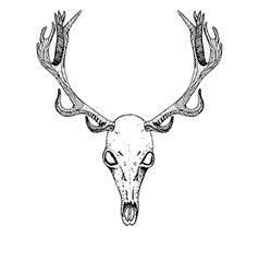 Sketch Deer Skull vector image vector image