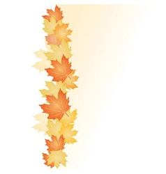 fall leafs vector image