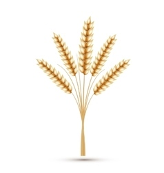 Wheat ears isolated on white background vector image vector image