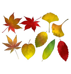 An autumn leaves set vector
