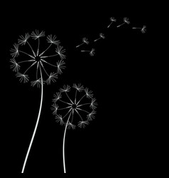dandelions with seeds vector image