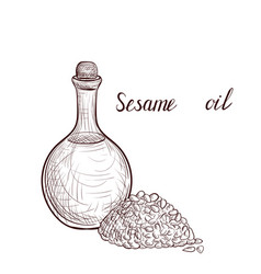 drawing sesame oil vector image