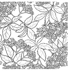 elderflower seamless pattern vector image