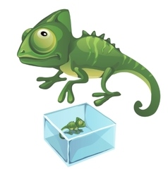 green iguana and one frozen in ice vector image