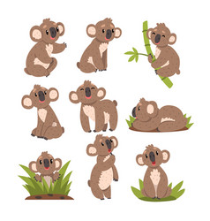 Koala bear set australian marsupial animal vector