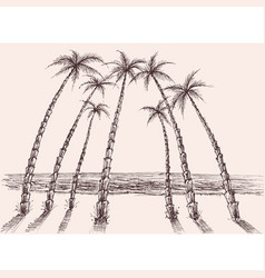 palm trees beach sea view hand drawing vector image