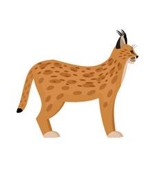 wild lynx cartoon character vector image