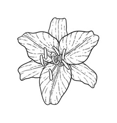 beautiful monochrome black and white bouquet lily vector image