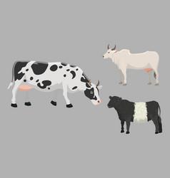 Bull and cow farm animal vector