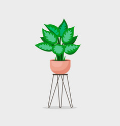 Cinese evergreen home plant vector
