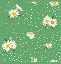 floral seamless pattern with blossom daisy flowers vector image
