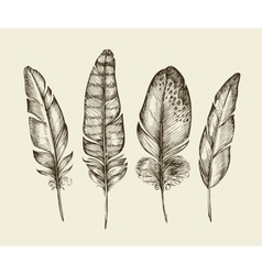 Hand drawn vintage bird feathers Sketch writing vector
