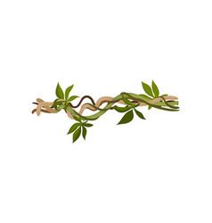 Liana with small leaves lies horizontally vector