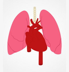 Lung and heart vector