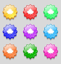Maple leaf icon Symbols on nine wavy colourful vector image