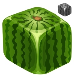 Ripe juicy delicious square watermelon vector image