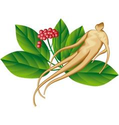 Ginseng vector image