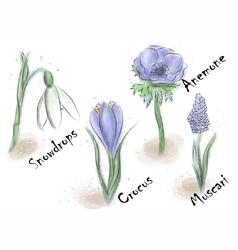 Bulb flowers vector