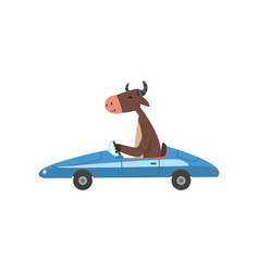 Cow driving blue car farm animal character using vector
