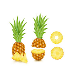 fresh tropical pineapple and ring pineapple vector image