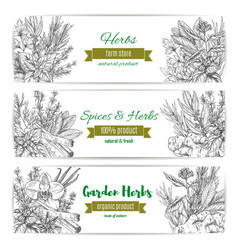 Garden herbs and spices banner for food design vector