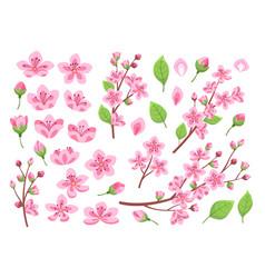 sakura blossom asia cherry peach flowers vector image