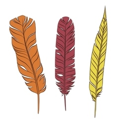 Set colorful feathers on a white background vector