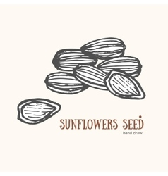 Sunflower Seeds Card Hand Draw Sketch vector image