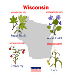 wisconsin set usa official state symbols vector image