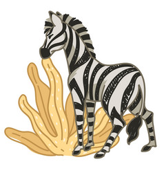 zebra eating dry leaves in africa or savannah vector image