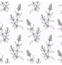 Hand drawn hyssop branch outline seamless pattern vector image vector image