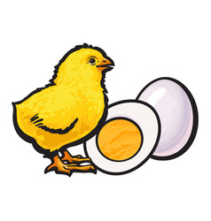 little chicken with boiled peeled egg whole and vector image