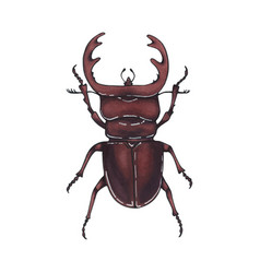 beetle deer hand drawn insect vector image