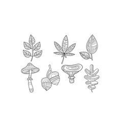 collection hand drawn plants leaves vector image