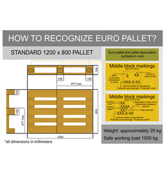 euro pallet vector image