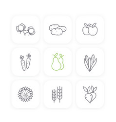 harvest line icons set potato carrots pears vector image