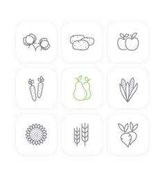 harvest line icons set potato carrots pears vector image